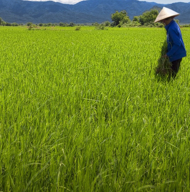 Promoting Climate Resilient Rural Infrastructure in Northern Vietnam, ADB-Funded